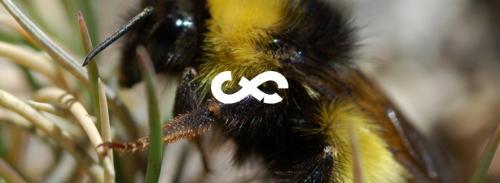 biodiversia 6